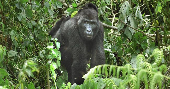 Foto di animali che vivono montagna 83