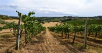 "Pedalando tra i vigneti con ""Tuscany Wine and bike"""