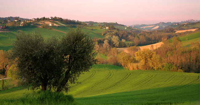 Colline marchigiane (foto Enzo Cositore / Alamy/Milestone Media)